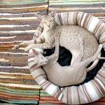 Le chat de race Oriental