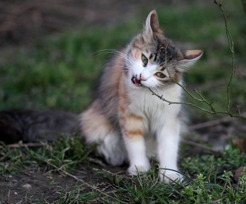 le chat mange quand meme malgré une douleur dentaire ! chapeau !