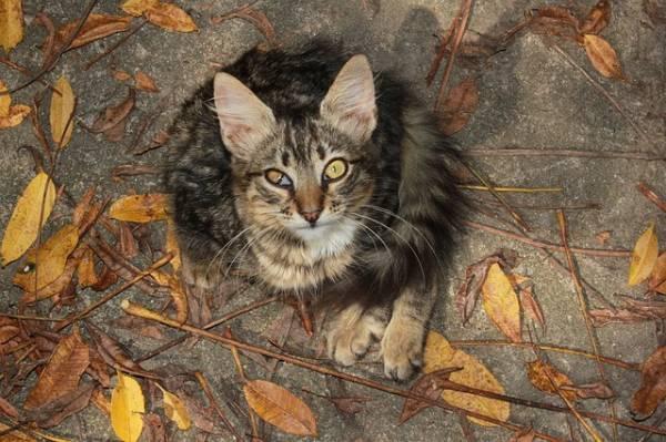 Chat touché à l'oeil droit par epillet