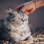 Les bienfaits du chat sur notre bien être