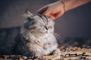 bienfaits chat