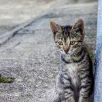 Comment approcher un chat errant ?